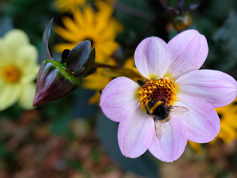 _DSF9878-Bee-Flower-Shp-Fini-3Amigos-W.jpg