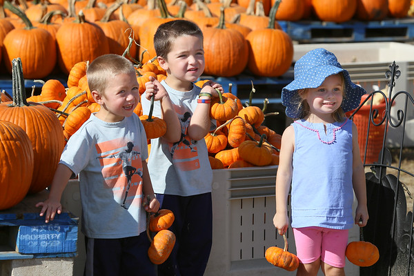 Duffields Pumpkin Farm 2017