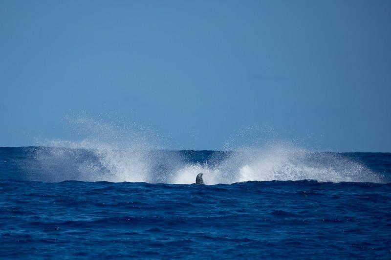 whales-leila-66.jpg