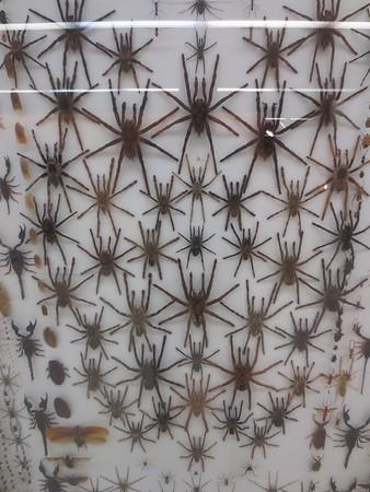 Santa Fe Bug Museum