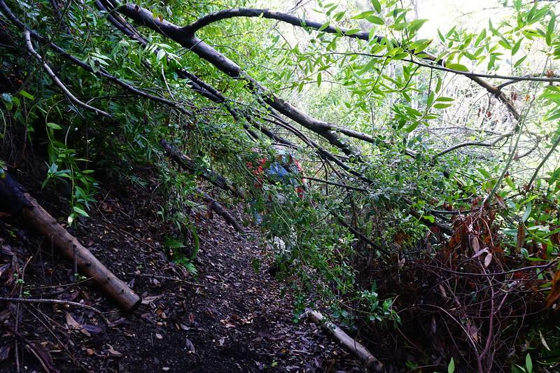 20160218074-Gabrielino Trail Scouting.JPG