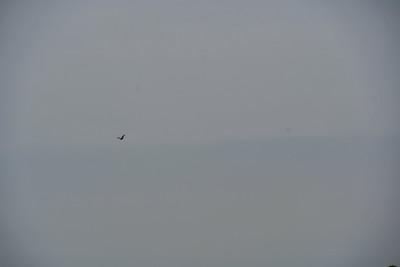 1230PM Heart of Rookery Bay Kayak Tour - Clausen