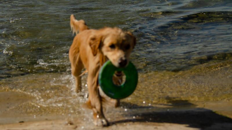 PuppyParty18-622.jpg