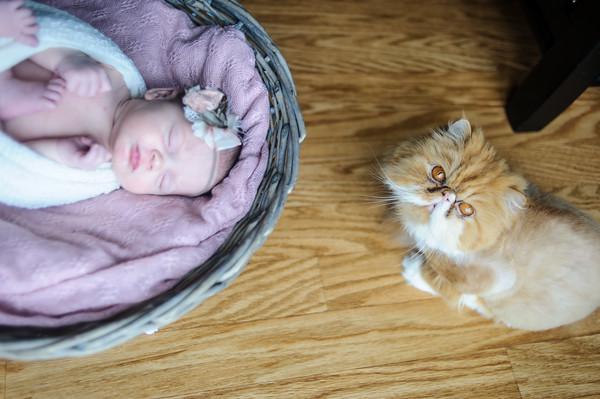 Mandy Williams Newborn