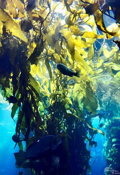 Kelp Life