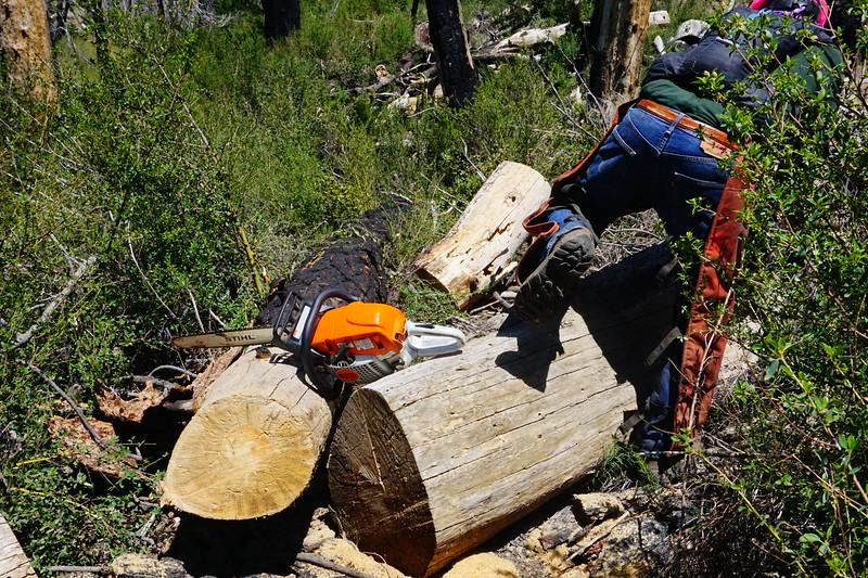 20170430017-Vetter Chainsaw Trailwork.JPG