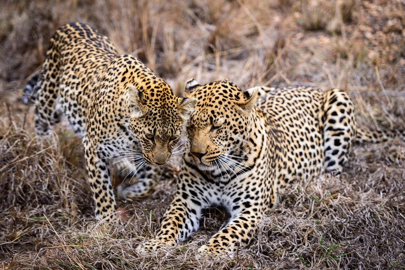 LeopardHills-20130825-0102.jpg