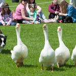 Countryside Day 2015