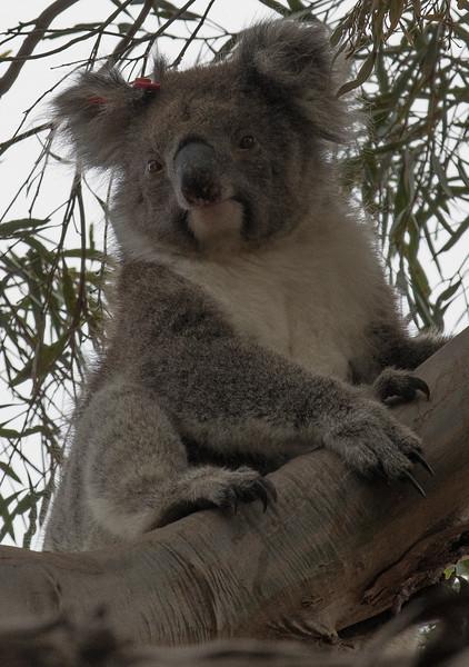 Australia-66.jpg