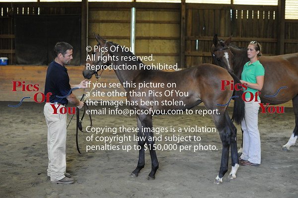 Foal entry 11