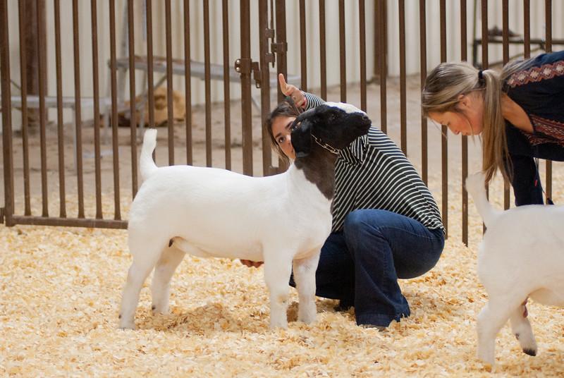 kay_county_showdown_goats_20191207-196.jpg