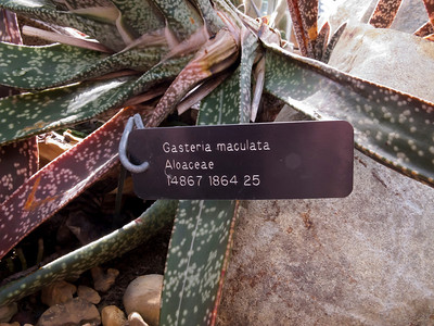 Arid House - Catalog of Asphodelaceae (new sorting)