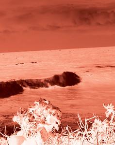 cyanotype images
