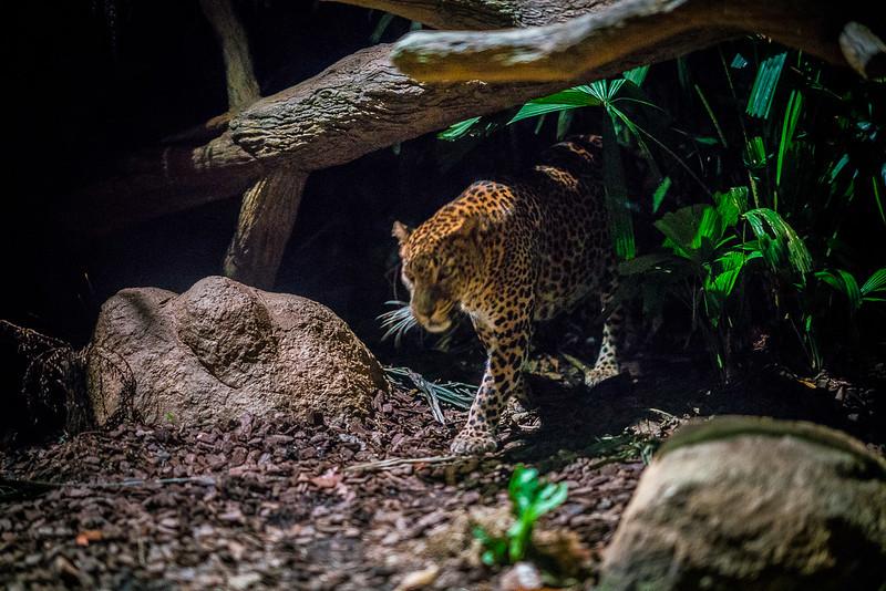 Night-Safari-9761.jpg