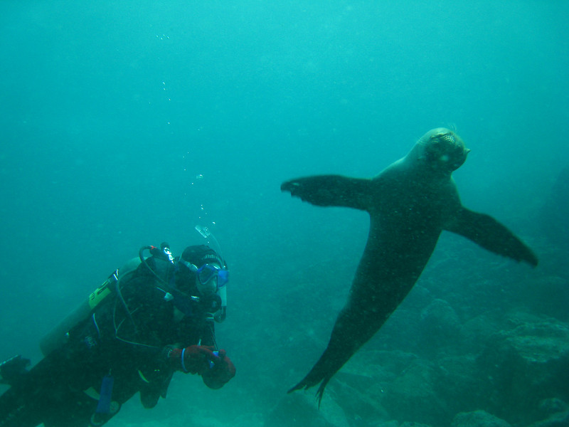 Diving in the Galapagos (300 of 392)