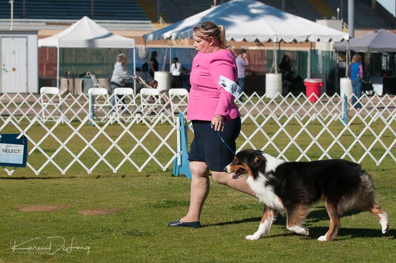 20170205_Australian Shepherds_Lost Dutchman Kennel Club-49.jpg