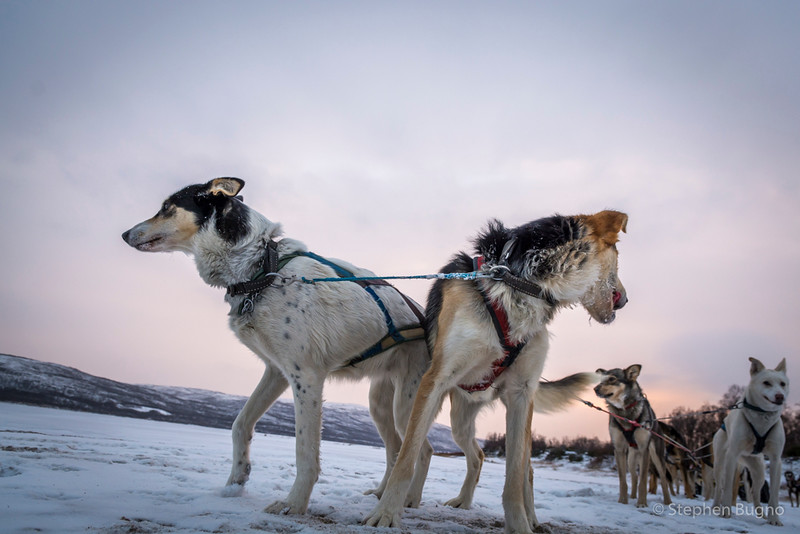 Dog Mushing-9925.jpg