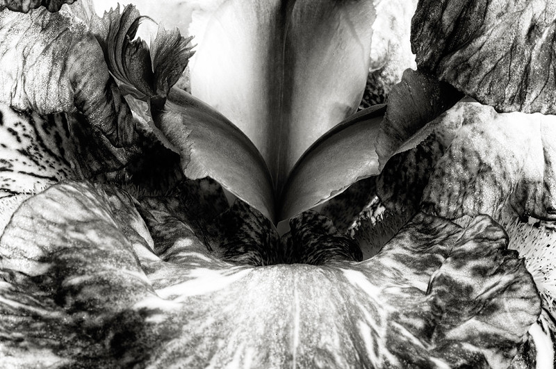 iris-batik-02bw.jpg