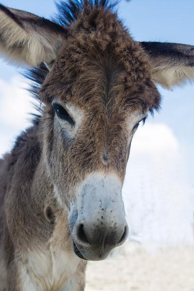 DonkeyPortrait4-2-Edit.jpg
