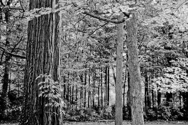 Forest in Flint