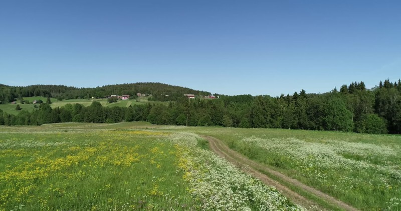 Aerial: following a track through flowering meadows at low height