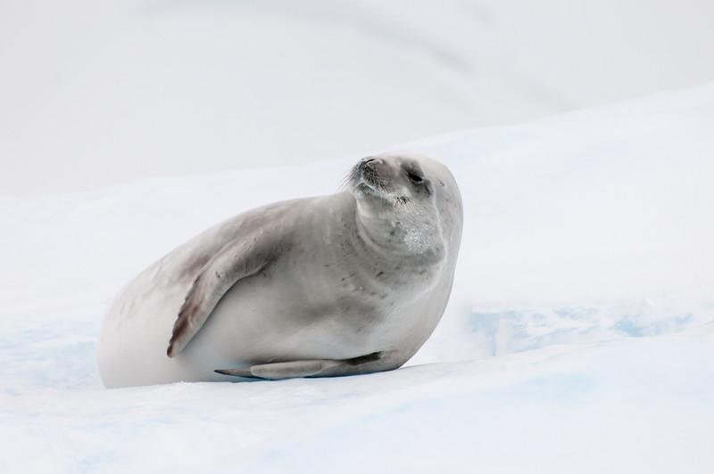 Antarctica 2015 (30 of 99).jpg