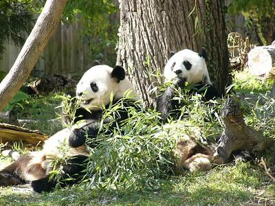 National Zoo 2003