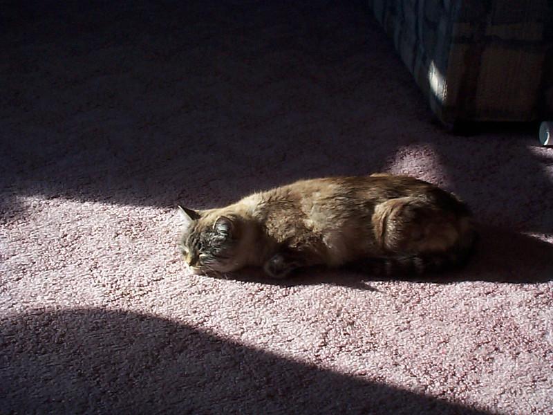 Tenisha soaking up the sun