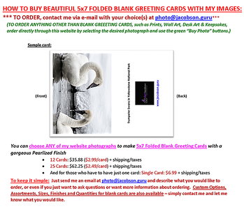 TO ORDER BLANK GREETING CARDS