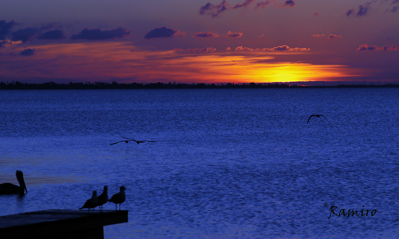 Laguna Madre IMG_3472.jpg