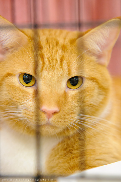 20110514 PetSmart Adoption Event-76.jpg
