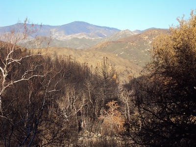 Late December 2009 - The Forest Recovery Project begins