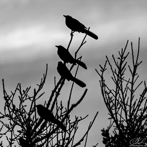 Birds at Dusk 1 of 4