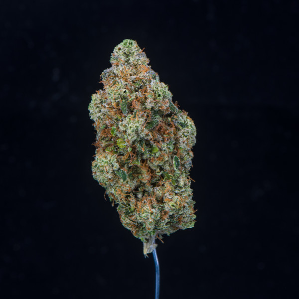 Headmaster Kush - Redbud Roots1.jpg