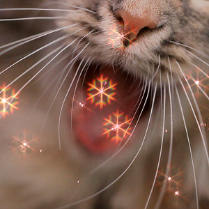 Cat-ching Snowflakes