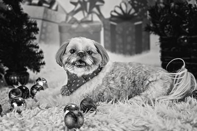 Ralphie Christmas