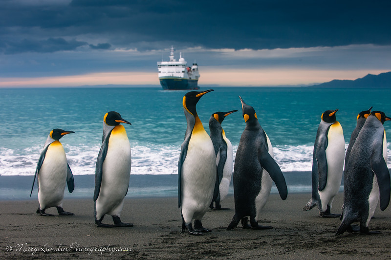 Antarctic-110