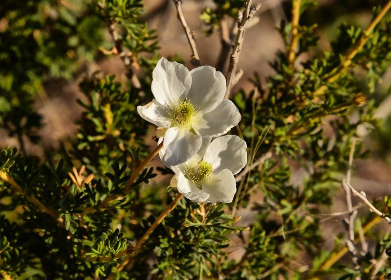 NEA_0832-7x5-Flowers.jpg