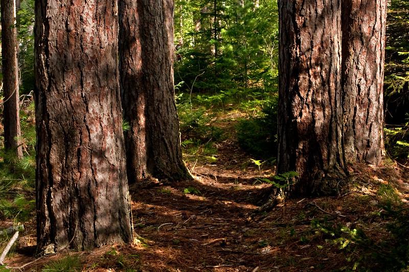 Trail Through Forest 4 | Along shoreline