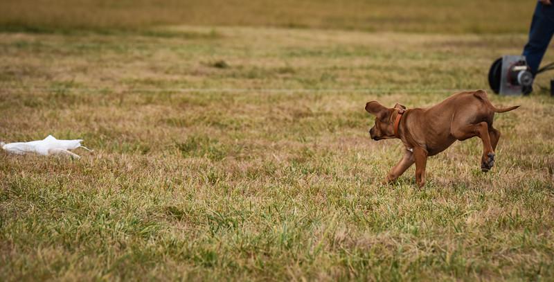 puppy-71.jpg