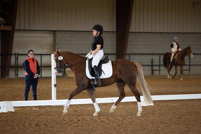 Horse 37