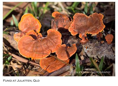 Australian Fungi