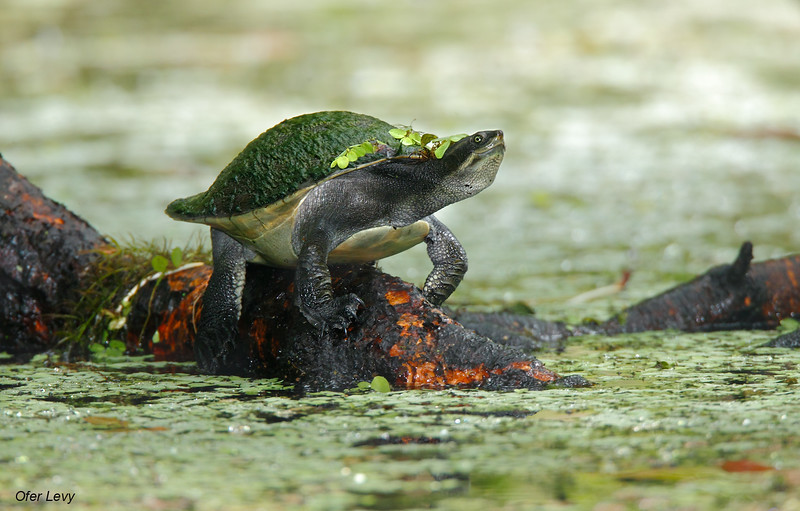 Tortoise MASTER.jpg