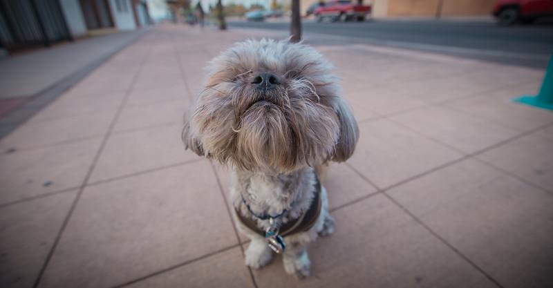 OM Doggos - Orson & Hayao - NL