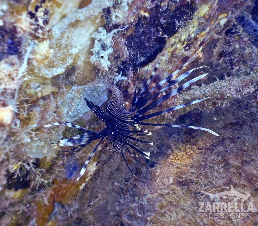 """""""Lionfish"""" (Fort Amsterdam, St. Maarten)"""