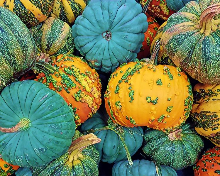 Trader Joe's pumpkin patch