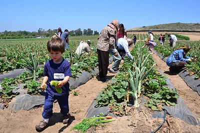 Tanaka Farms, Irvine, May 2012