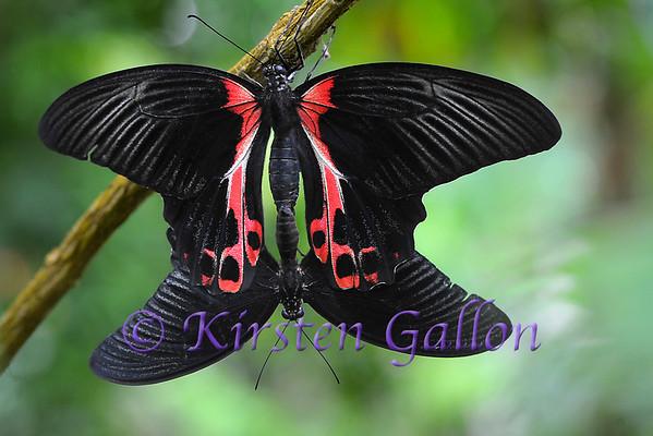 Butterfly Exhibit Fort Worth Botanical Gardens 2012
