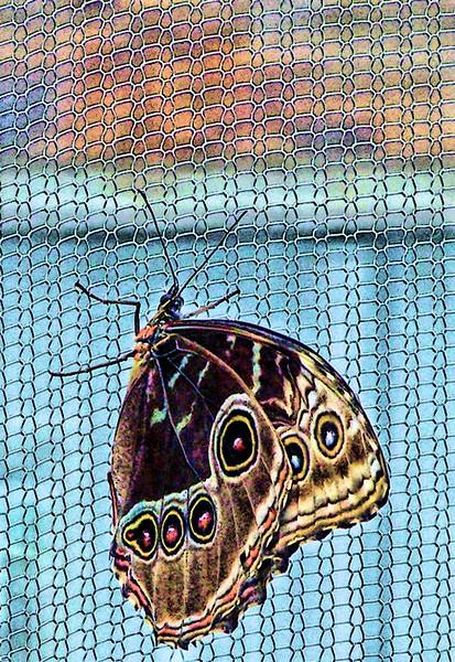 butterflySM.jpg