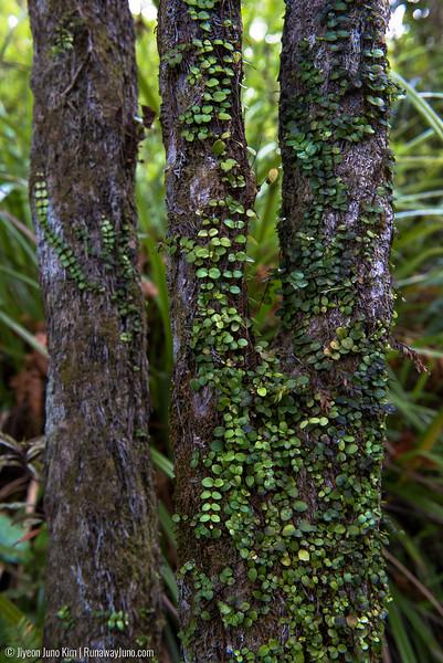 New Zealand green